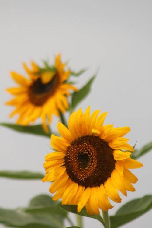 Flower_022