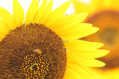 Flower_024