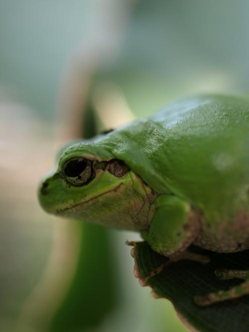 Frog2_007