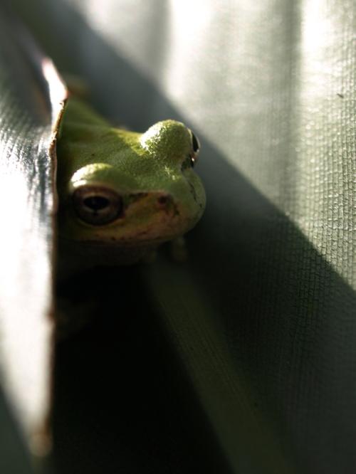 Frog2_009