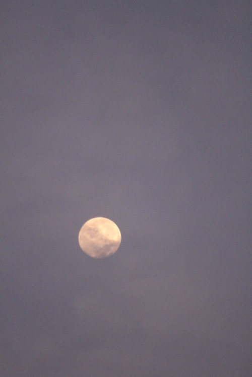 Morning_moon_006