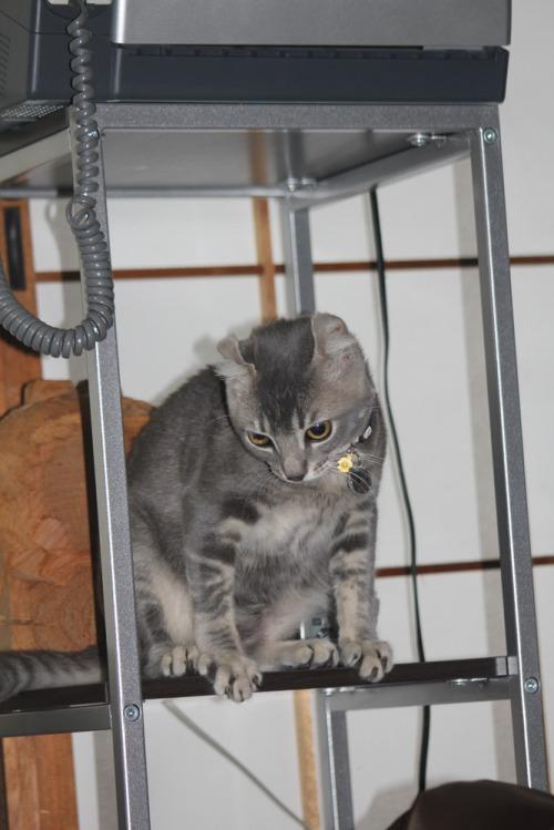 Kitten_003