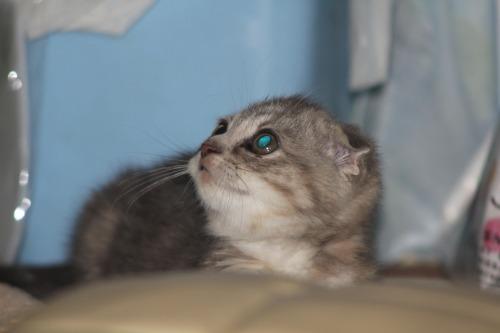 Kitten_004