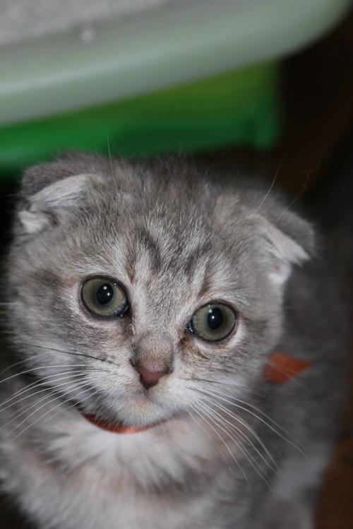 Kitten_007