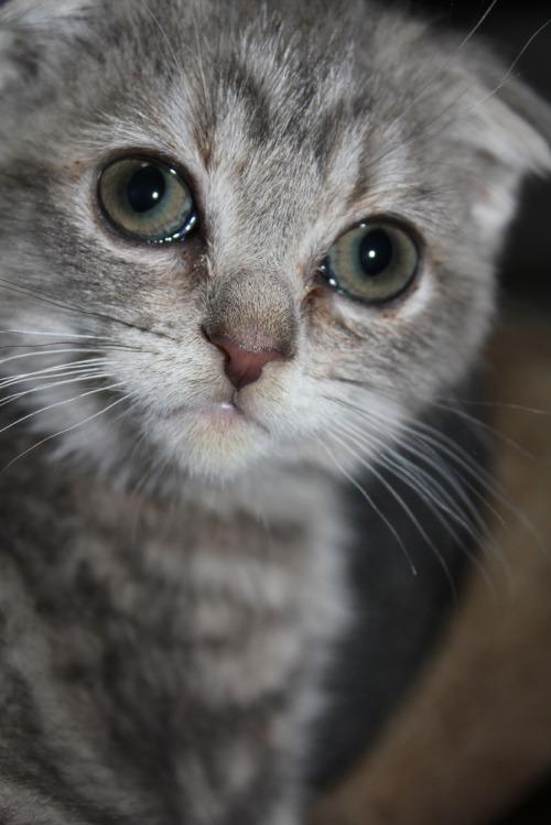 Kitten_009