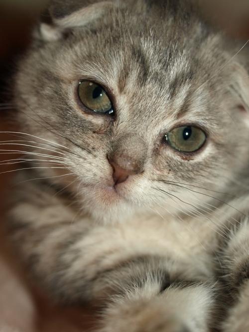 Kitten_015
