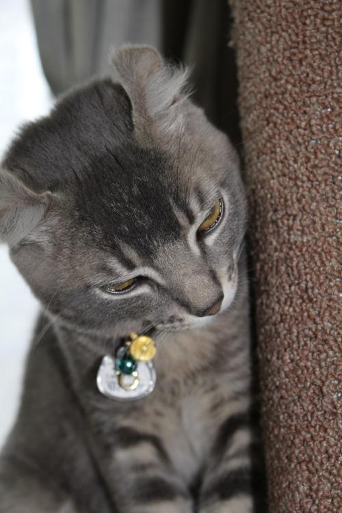 Cat_004