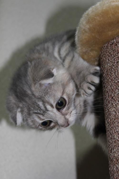 Cat_009