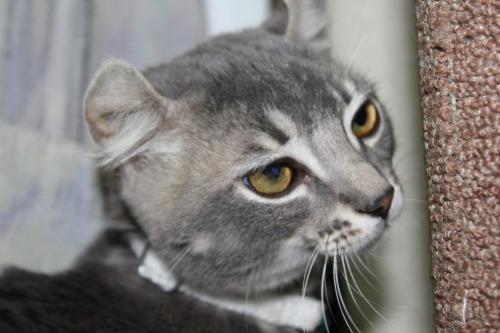 Cat_016