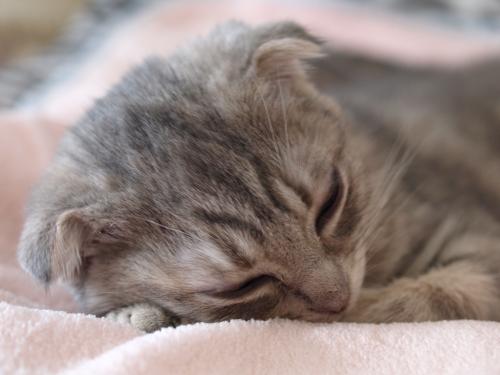 Kitten_002