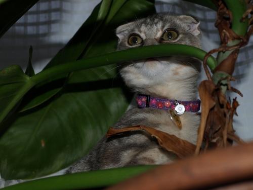 Kitten_008