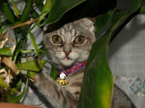 Kitten_013